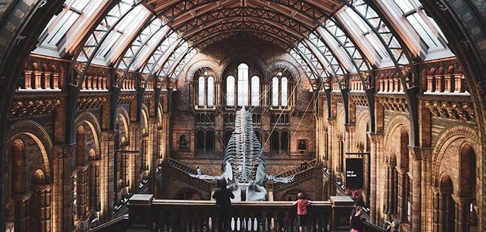 Museo Historia Natural de Londres Ballena Azul